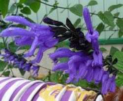 P1020568紫花