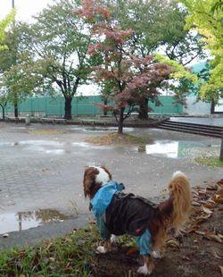 P1020795公園2