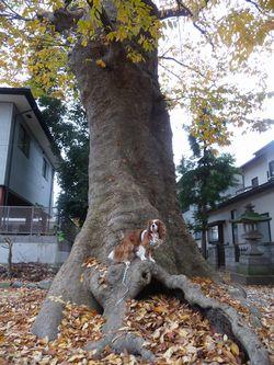 P1030042大木