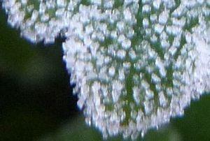 P1030130霜2