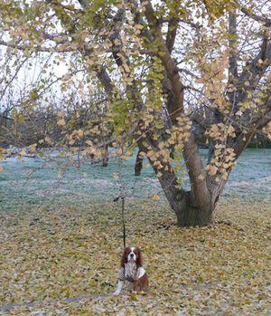 P1030189銀杏の木