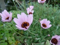 P1030221お花
