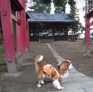 P1030284神社