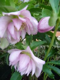 P1030535お花