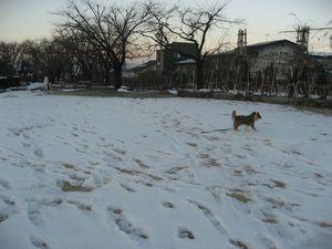 画像 001公園1