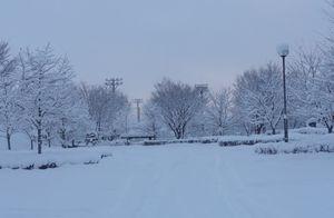 画像 001北公園