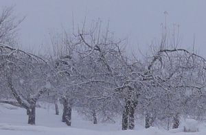 画像 009雪