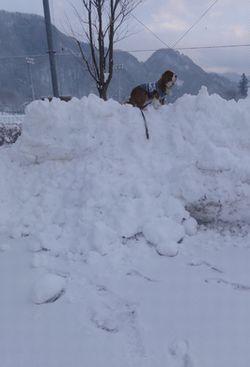 画像 006雪山2