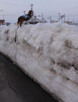 画像 002雪山1