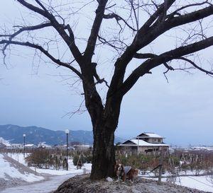 画像 008桜の木