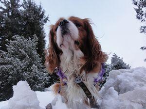 画像 005雪景色3