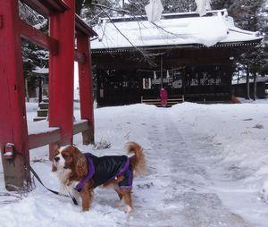 画像 004神社