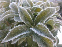 画像 014凍る