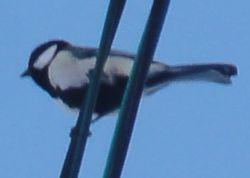画像 028小鳥