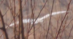画像 024白い鳥