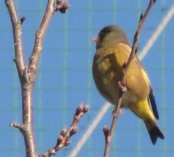 画像 025小鳥