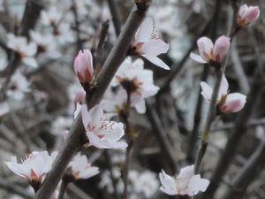 画像 029桜
