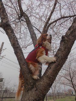 画像 034木登り