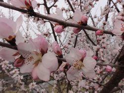 画像 033桜