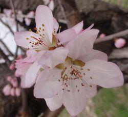 画像 028桜