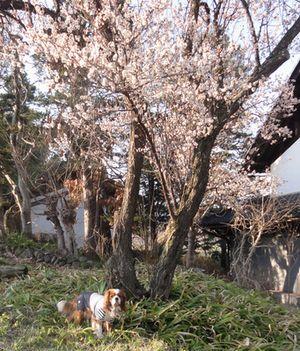 画像 028梅の古木