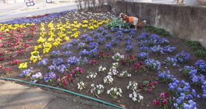 画像 033花壇
