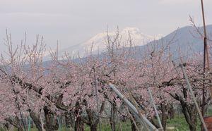 画像 055春景色