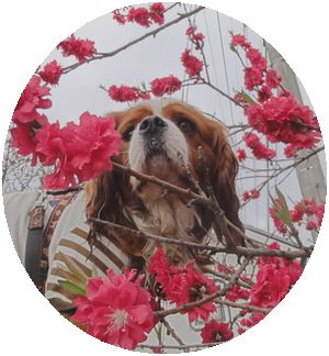 画像 061花桃