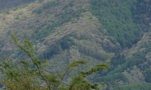 画像 062山