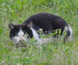 画像 081猫