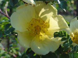 画像 084バラの花