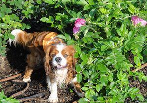 画像 078バラ花壇