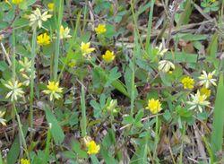 画像 084黄色花