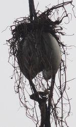 画像 078鳥の巣