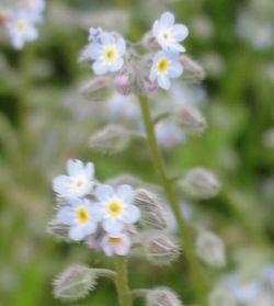 画像 082青小花