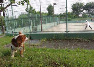 画像 077テニスコート