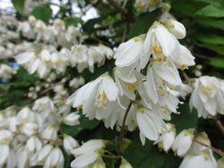 画像 098白い花
