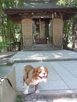 画像 086神社