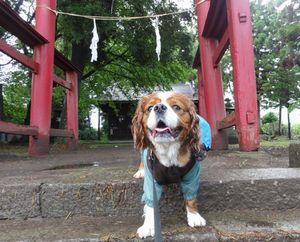 画像 087神社