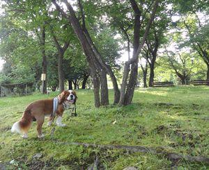 画像 091公園2