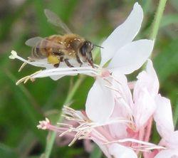 画像 084蜂