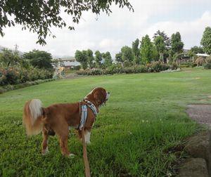 画像 087公園1