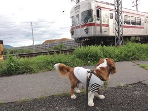 画像 110電車1