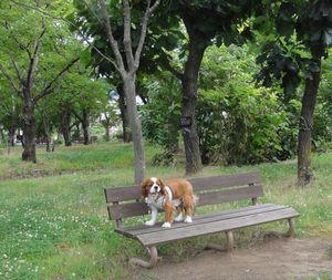 画像 112公園1