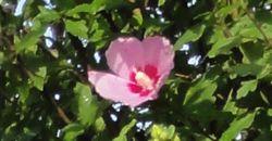 画像 097花