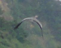 画像 098鳥