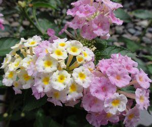 画像鉢の花