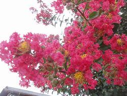 画像 106花