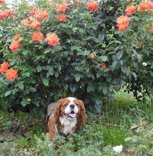 画像 109バラ花壇