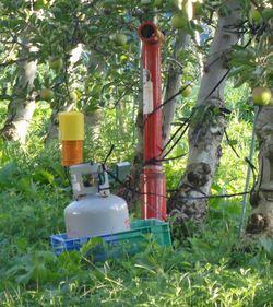 画像 096りんご畑2